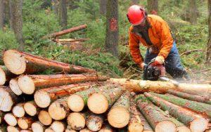 scierie ferland transformation bois